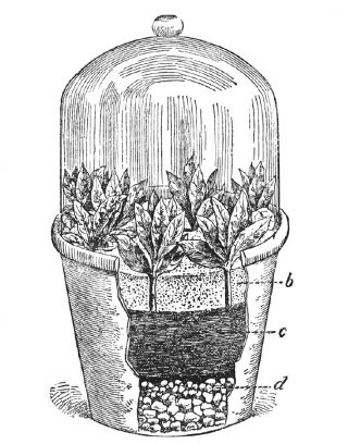 Drawing of a terrarium