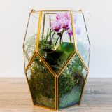 Photo of a terrarium with air plants and orchids