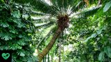 Photo of a cycad