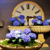 Purple flowers in stone bowls in front of a clock