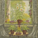 Illustration of houseplants