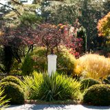 Photo: Plants for Landscaping