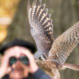 Photo of a bird of prey