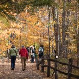 People walking through the Forest in fall.
