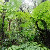 Photo of rainforest plants