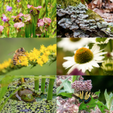 Photo collage of plants and animals