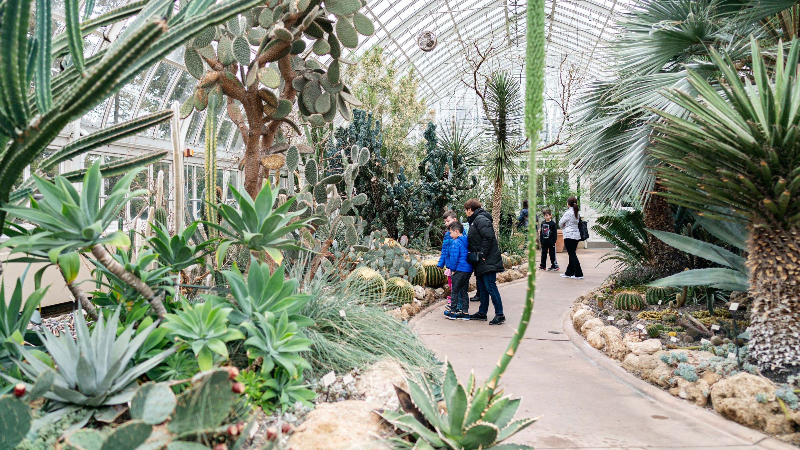 Children examining plants in the Desert House of the Conservatory.