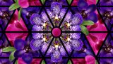 Purple and pink orchids laid out in a kaleidoscope pattern.