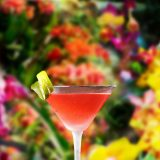 Image of a cocktail