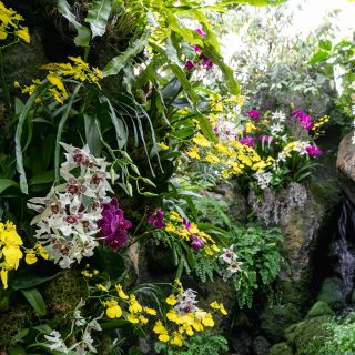 Photo of orchids planted among moss and tropical plants
