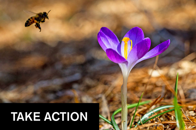 """Photo of a bee and crocus above """"TAKE ACTION"""" headline"""