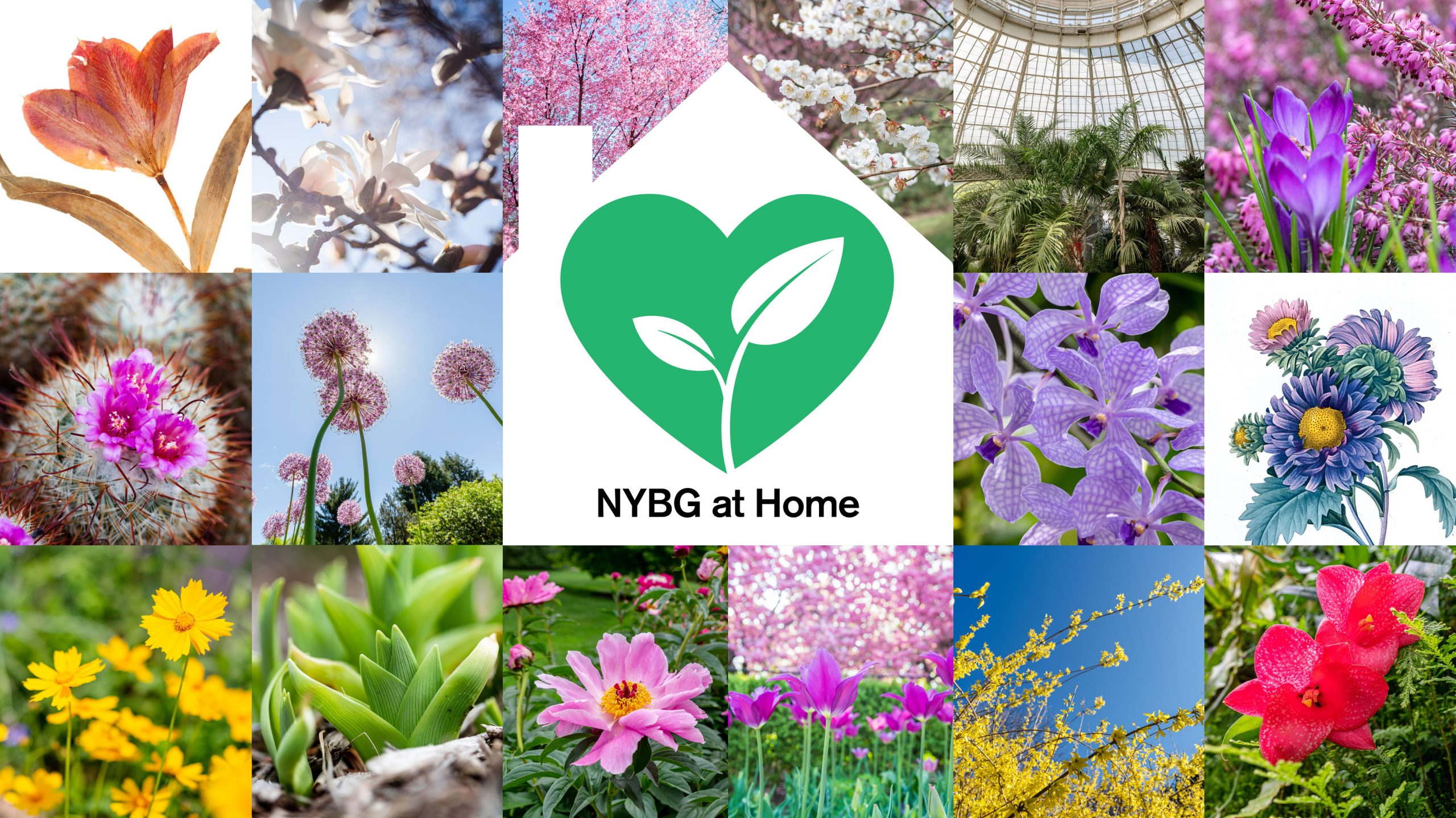 "A variety of tiled images of spring flowers with a white illustration of a home in the center, housing a green heart with a sprout growing inside, along with the words ""NYBG at Home."""
