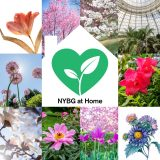 A variety of tiled images of spring flowers with a white illustration of a home in the center, housing a green heart with a sprout growing inside, along with the words
