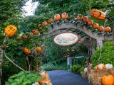 ECAG entrance during fall with pumpkins all around