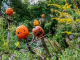 Several pumpkins with faces in the grass