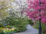 White, green and pink flowers on trees and tulips along the path
