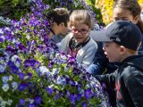 Children looking at purple/blue flowers