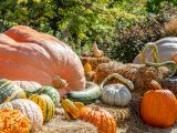 Various shapes and colors of pumpkins and gourds