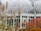 Green, white and brown plants in focus with a Haupt Conservatory glasshouse in view in the distance.