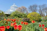 Bright tulips and conservatory palm dome
