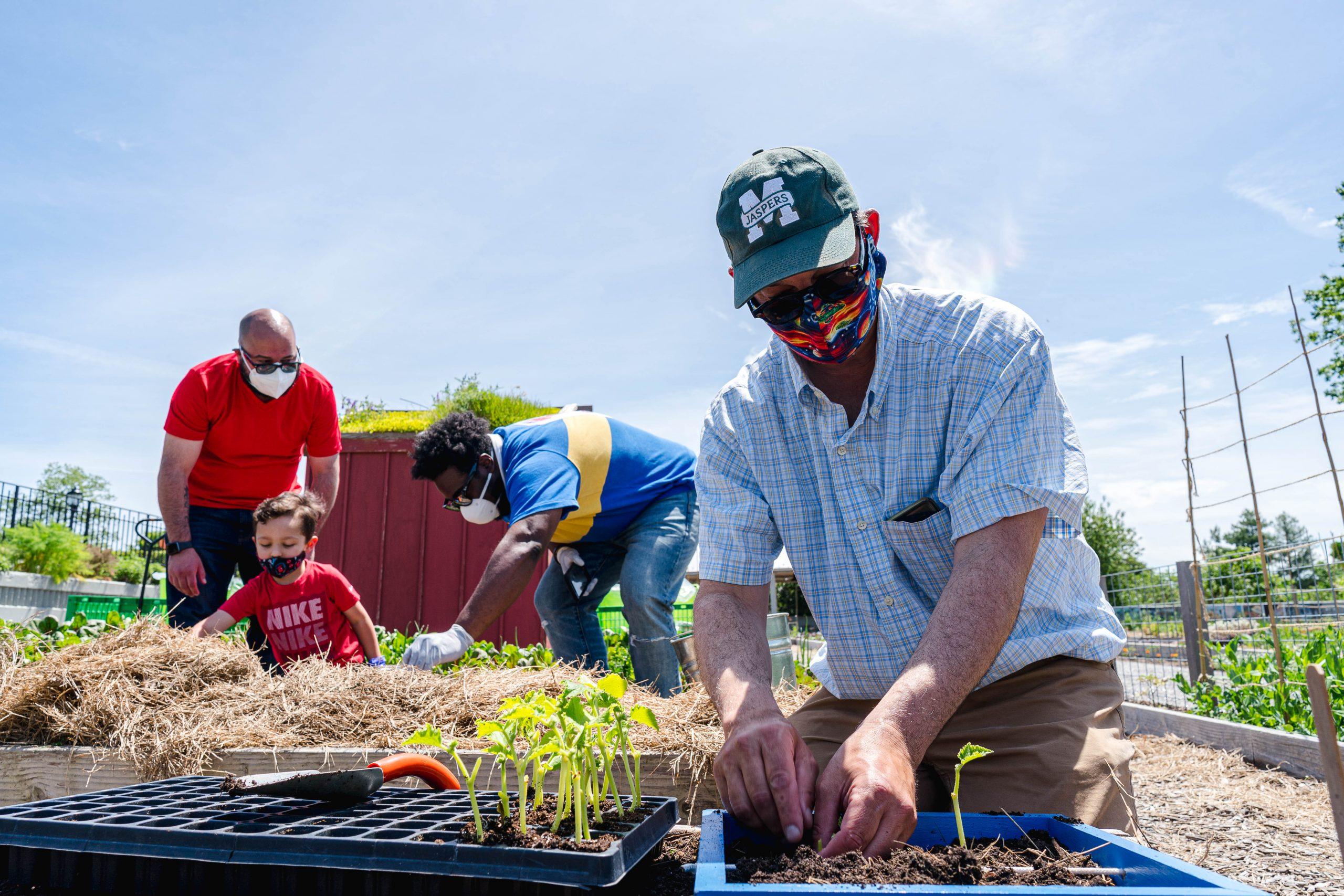 Photo of vegetable harvesting