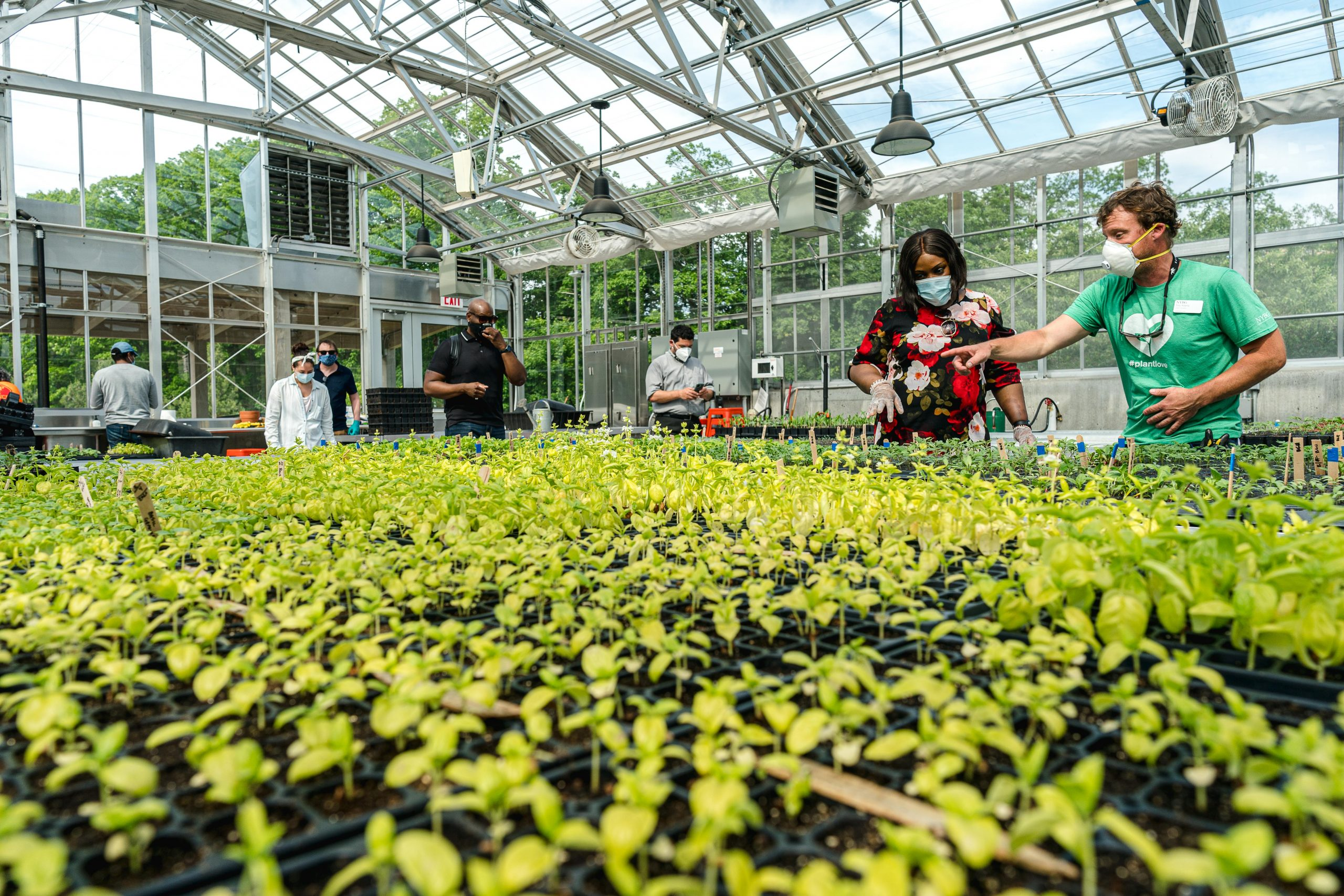 Photo of people working in the greenhouse