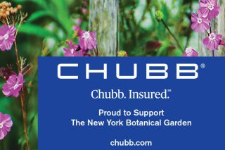 Chubb Ad