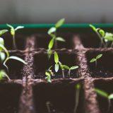Photo: Soil Science for Gardeners
