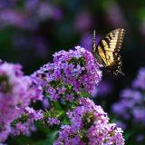 Photo: Pollination Ecology