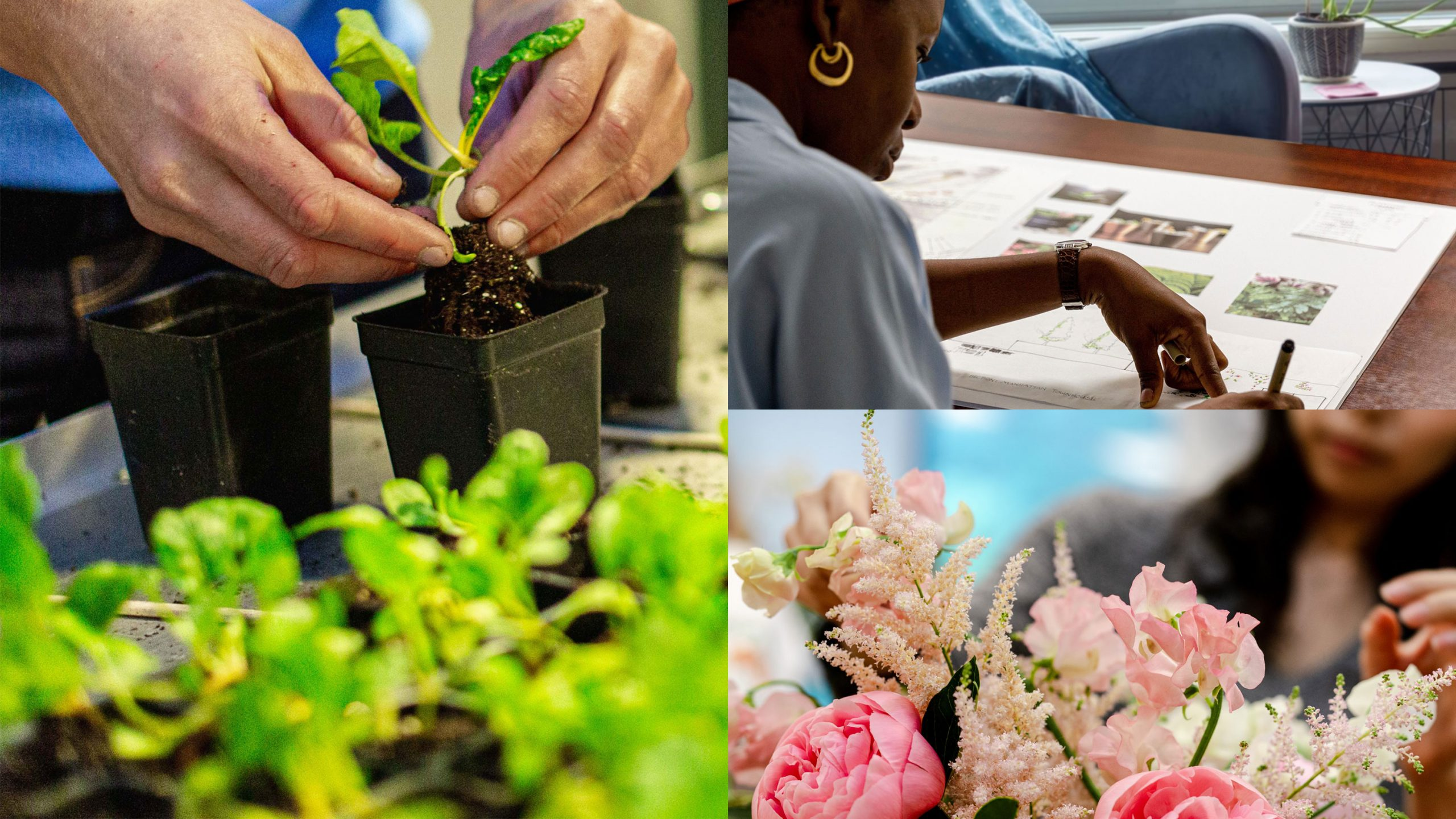 Grid of three images, hands planting small plant in pot, a woman drawing on a landscape design, and a woman standing behind pink floral arangment