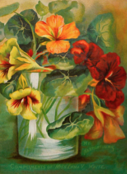 Photo of a painting of nasturtiums