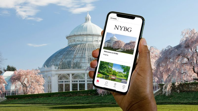 A hand holding a cell phone using the Bloomberg Connects App in front of the Conservatory in spring