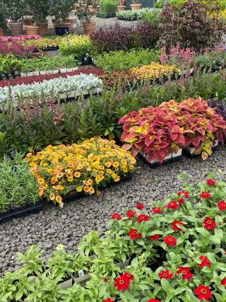 Photo of plants waiting to be planted
