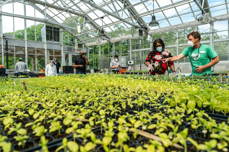 Photo of the Edible Academy Greenhouse
