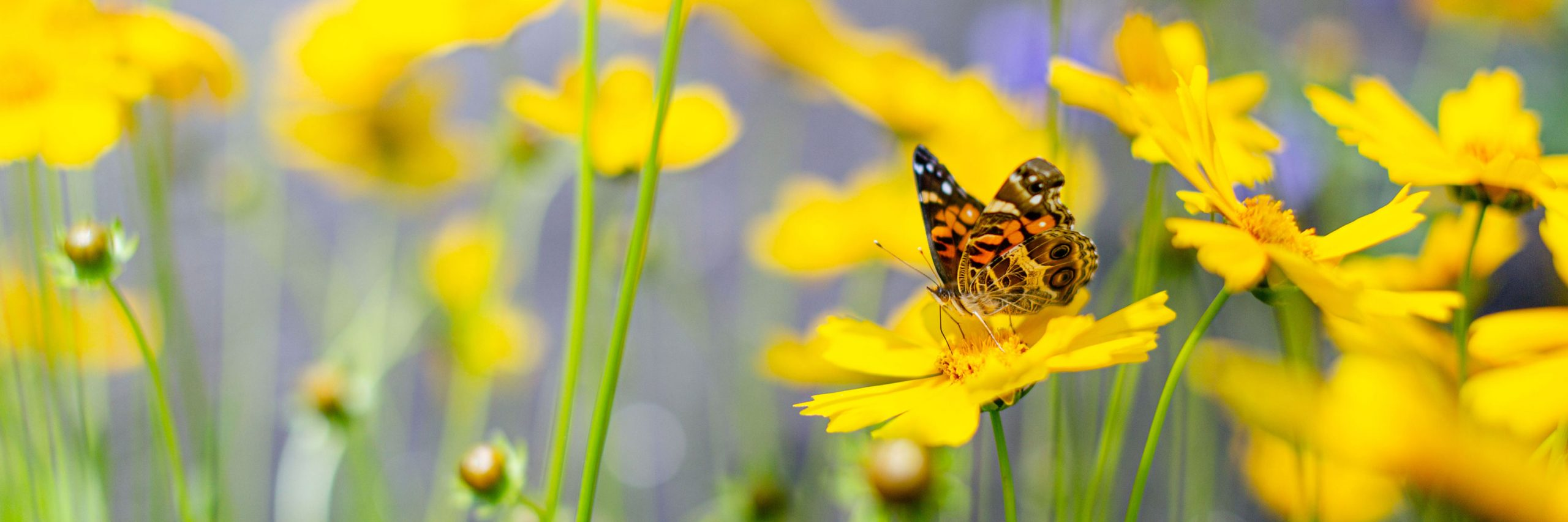 A butterfly perched on a yellow flower