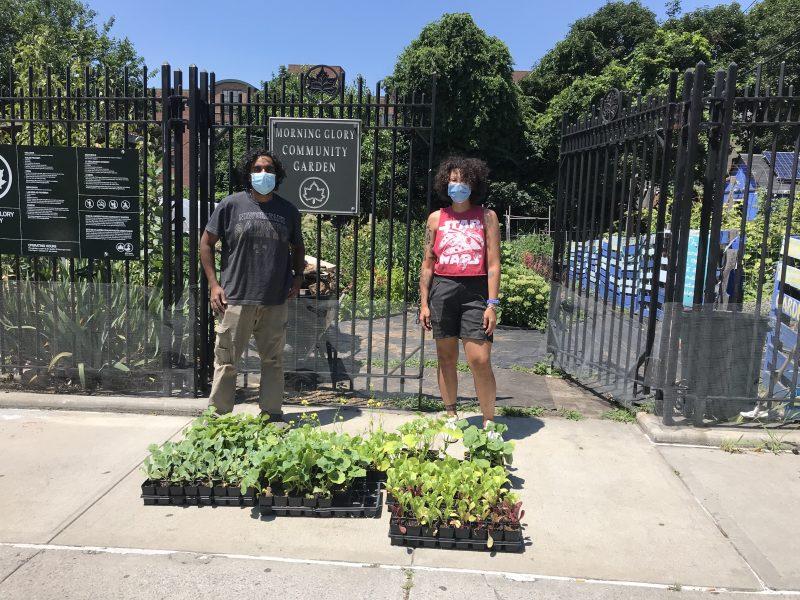 Photo of Morning Glory Community Gardeners
