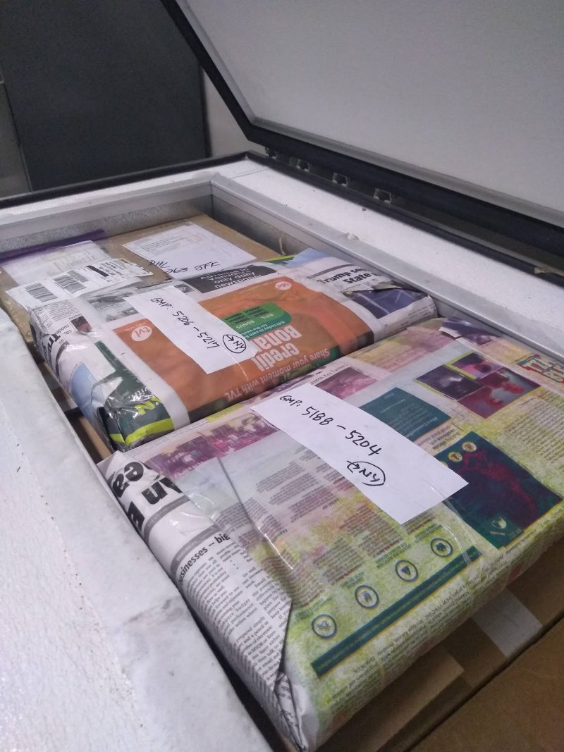 Herbarium specimens in a freezer.