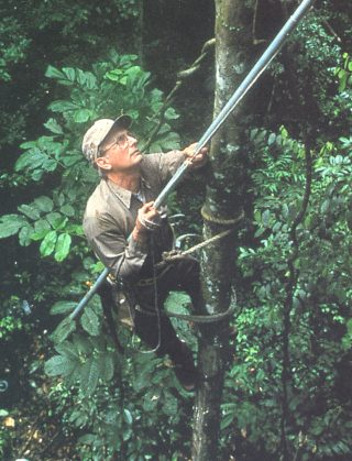 Photo of Scott Mori climbing a tree in the Amazon