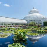 Lily pads, water lilies, lotuses, and other aquatic plants floating in a reflecting pool as the Enid A. Haupt Conservatory's dome and display houses reach up to a blue sky.