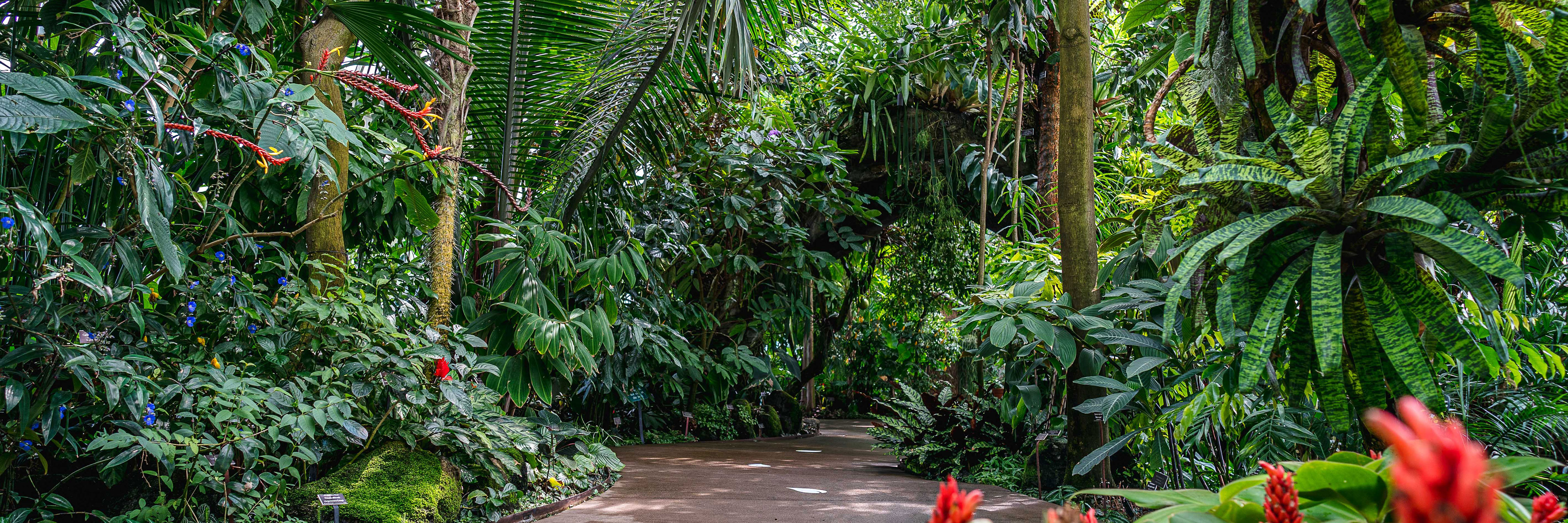 Lowland rainforest gallery in the Conservatory