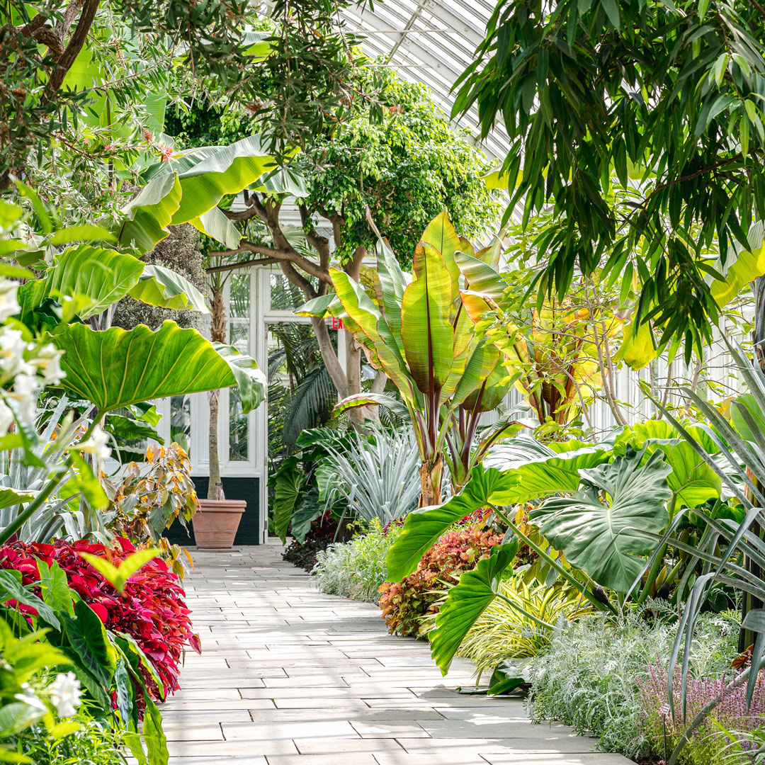 Photo of the Haupt Conservatory