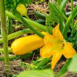 Photo: Hello Harvest!