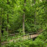 A bridge cutting through a lush forest