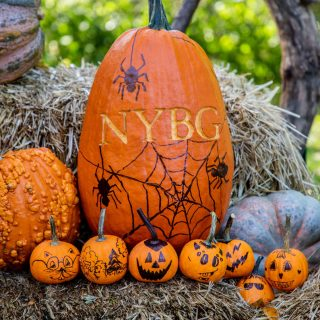 Pumpkin with NYBG carved into skin