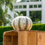 small white pumpkin with green vertical stripes sitting on a wooden crate