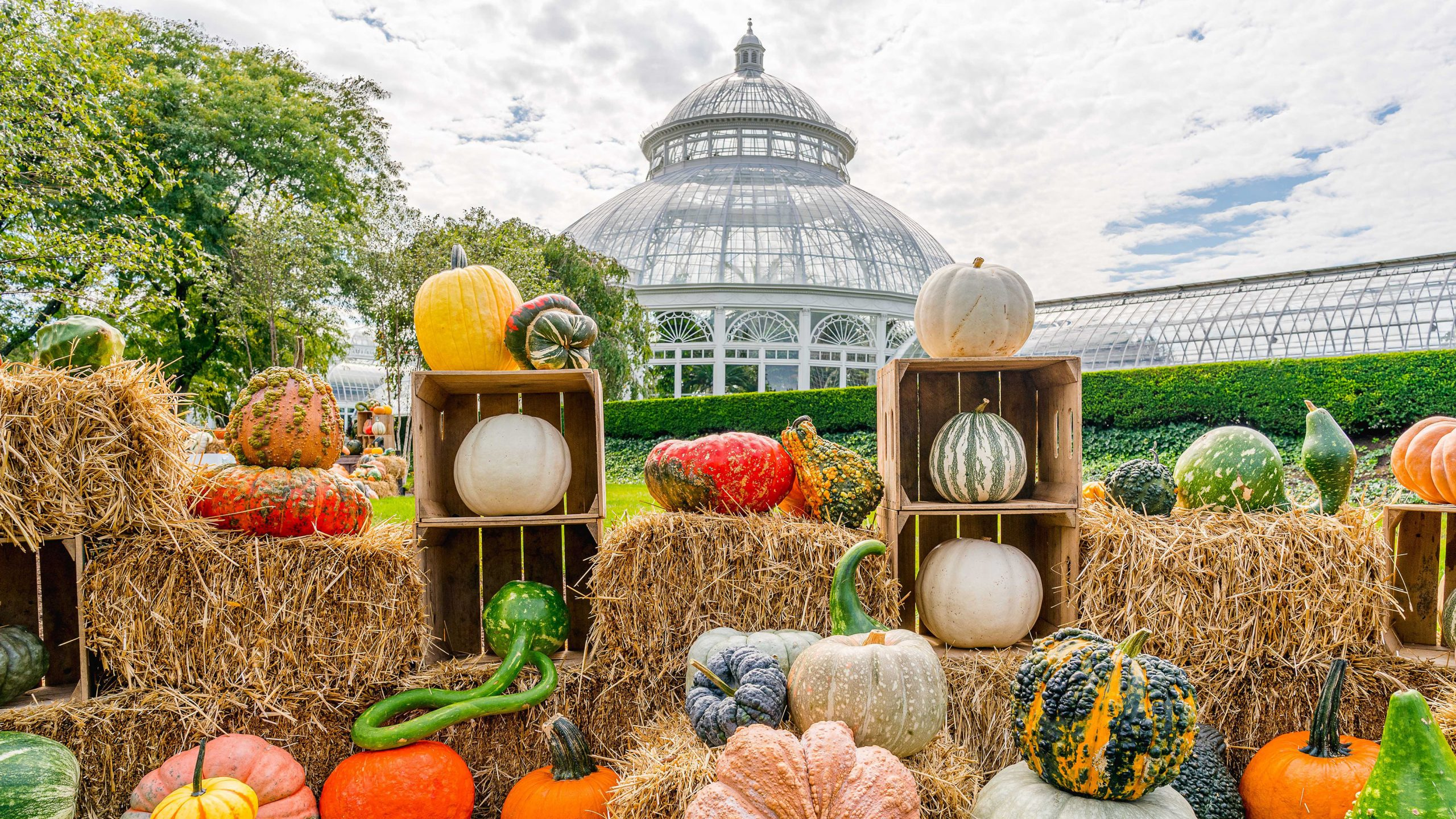 An array of pumpkins and gourds on hay bales and wooden boxes in frontn of the Enid A. Haupt Conservatory's dome