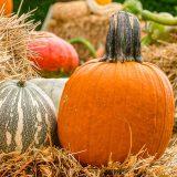 orange pumpkin with thick dark green stem