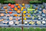 Different shaped and sized pumpkins arranged in a rainbow on concrete stairs