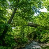 A bridge arcs over a small stream in a densely wooded forest.