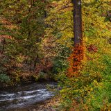 A river cuts through a thicket of trees in fall.